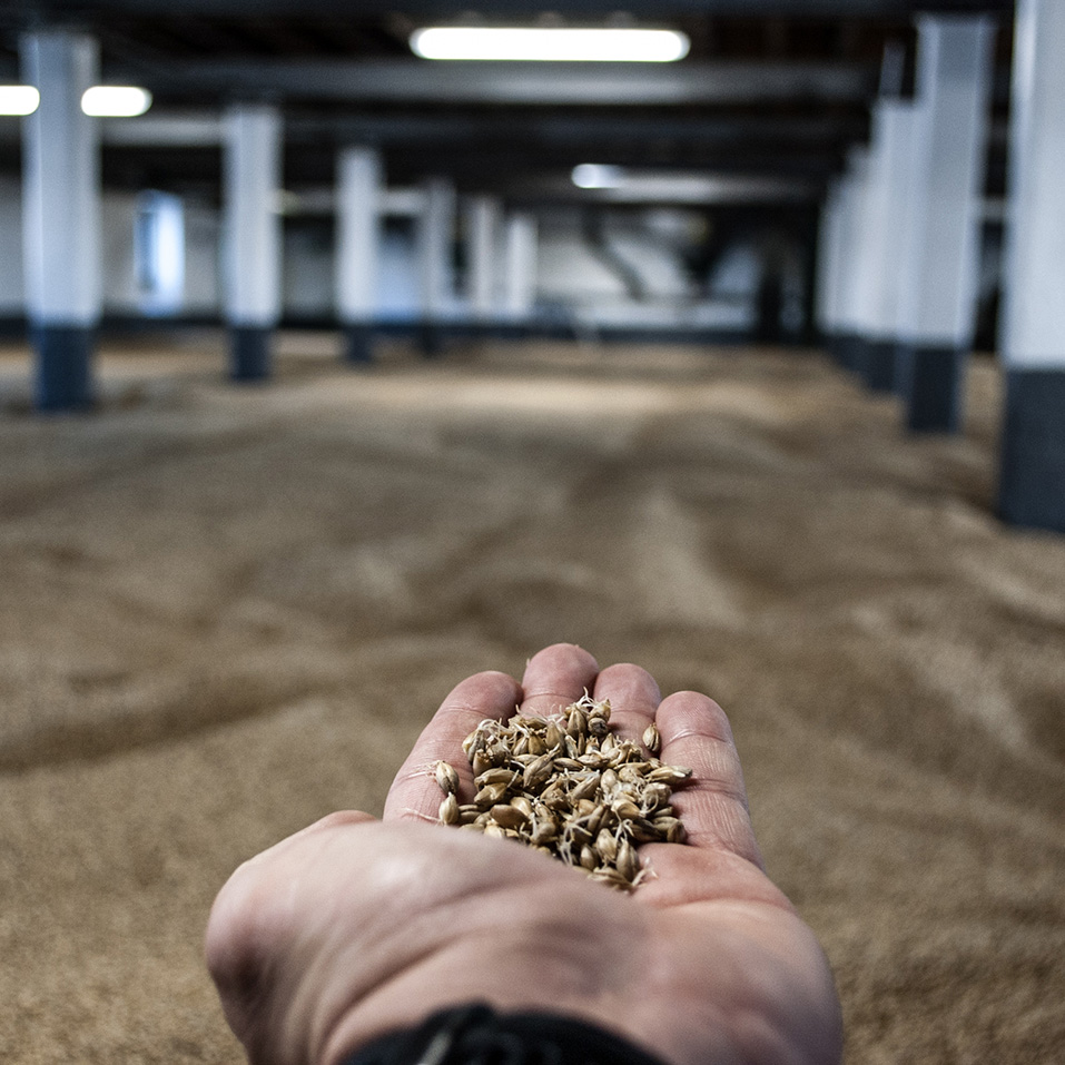 Barley For Single Malt Whisky Cask Investment